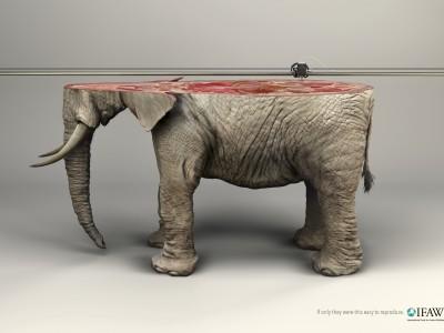 IFAW_Elephant