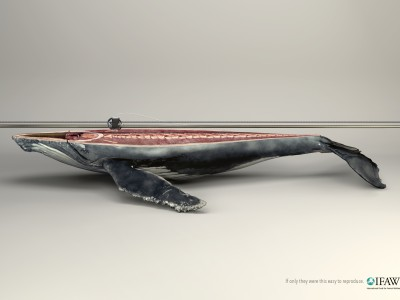 IFAW_Whale